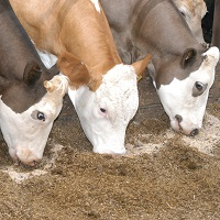 Feed & Animal Nutrition